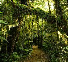 Moss on moss by bonsta