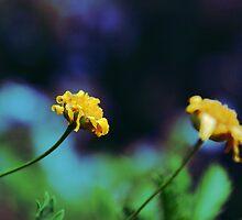 Cute Yellow Flowers by Denis Marsili - DDTK