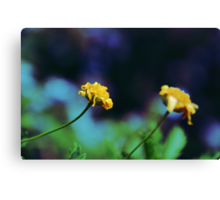 Cute Yellow Flowers Canvas Print