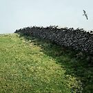 Stone Wall, English South Coast by Laura Cooper