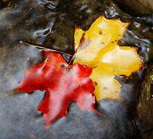 Autumn Tryst by Tim Devine