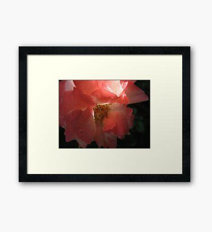 Poker Hot Rose Framed Print