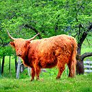 That Aint No Bull!?!? by Monica M. Scanlan