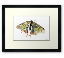 Madagascar Butterfly Framed Print