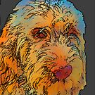 Pop Spinone by Cathy Stewart