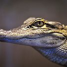 American Alligator Closeup by Dennis Stewart
