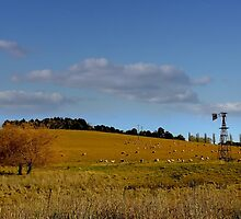 Blayney NSW - Country Roads No 1 by Rosalie Dale