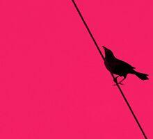 bird on a wire by patticake
