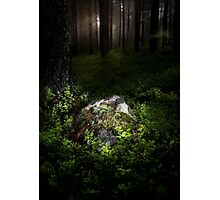 Son of the forest Photographic Print