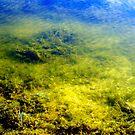 Mossy Bottom by Sandra Moore
