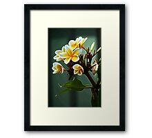 Dreaming of Spring Framed Print