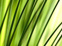 Green Spears by Aileen David
