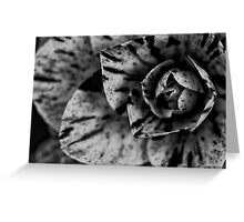 Timeless Bloom Greeting Card