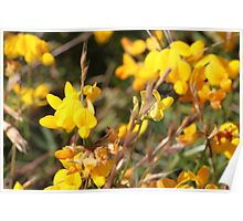 Yellow Springtime Wildflowers Poster