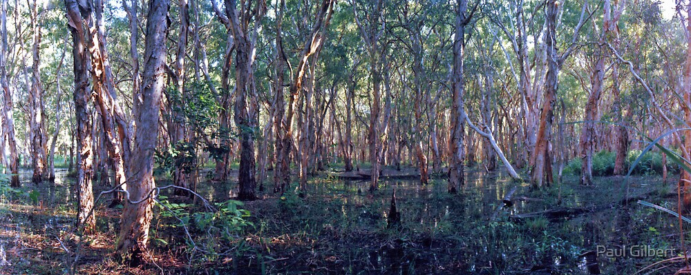 Paper Bark Swamp - Mackay North - Queensland by Paul Gilbert
