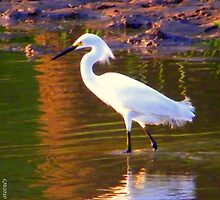 Snowy Egret at Sunset by CJ Obray