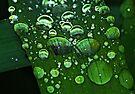 Green Rain Drops by Tori Snow