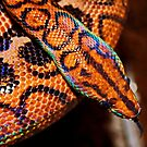 Rainbow Boa by AnnDixon