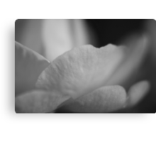 Silvertone Petals Canvas Print