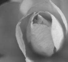 Silvertone Flower by Sonja Wells