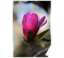 Magnolia -Pink- Poster
