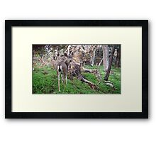 Deer Rear Framed Print