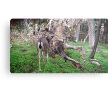 Deer Rear Metal Print
