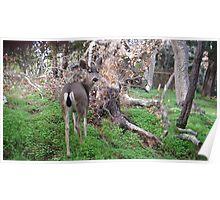 Deer Rear Poster