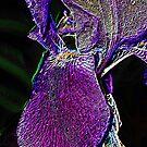 Neon Iris by skreklow