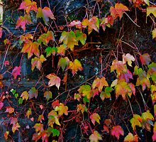 Dreaming of Leaves in Every Hue by Jen Waltmon