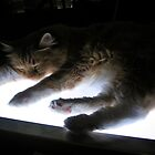 Asleep on the Lightbox by Jen Waltmon