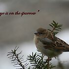 """His eye is on the Sparrow"" by Linda Jackson"