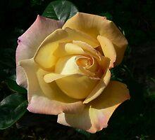 Roma's Rose by Malika Everingham