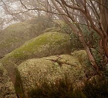 Mossy rocks at Mt Buffalo National Park, Victoria by Speedy