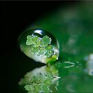 Clover Green by Kym Howard