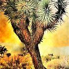 Joshua Tree  by LudaNayvelt