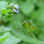 Green insect. by Annabella