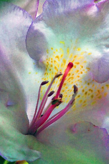 Rhododendron Blossom - Form and Color by T.J. Martin