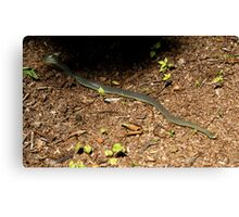 Met on The Trail Canvas Print
