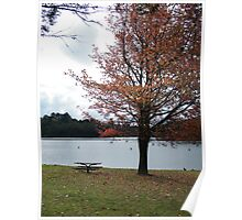 Wentworth Falls Autumn Poster