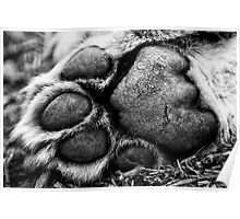 A Lion's Paw - Wildlife Heritage Foundation Poster