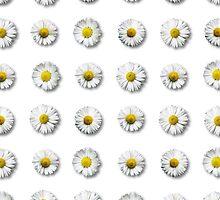 ♥ daisy ♥ by AgaSilva