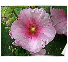 Flower after the rain Poster
