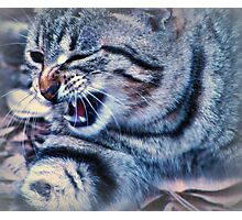 i'm a tiger......growl Photographic Print