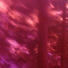 Back to the vivid forest n°9 by edend