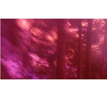 Back to the vivid forest n°9 Photographic Print