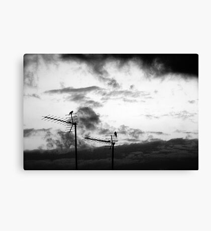 Harbingers Canvas Print
