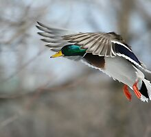 Drake Landing in the cold by Janika