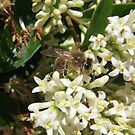 First Bee of the Season by Tama Blough