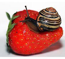 Dessert for Snail Photographic Print